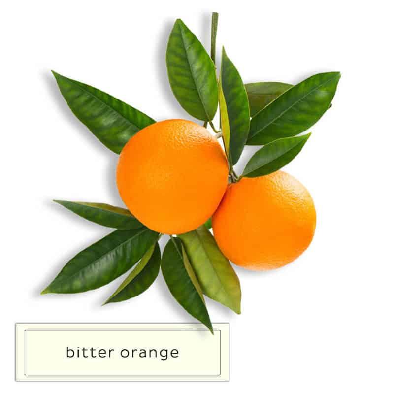 INGREDIENTS _0014_bitter orange